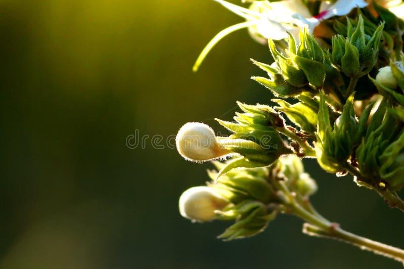 Witte en groene mooie bloemen stock fotografie