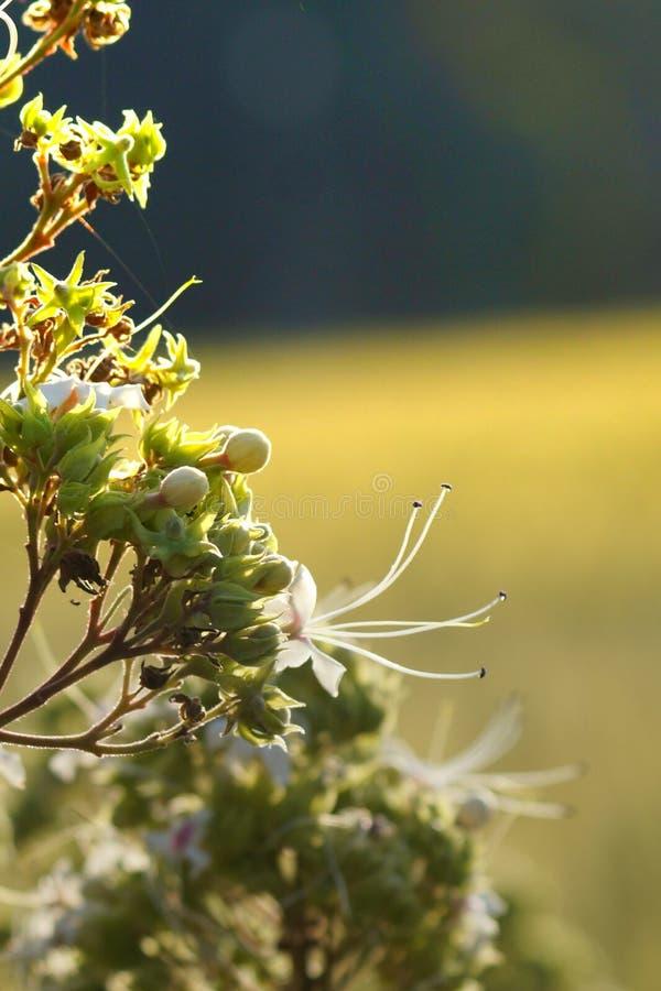 Witte en groene mooie bloemen royalty-vrije stock afbeeldingen