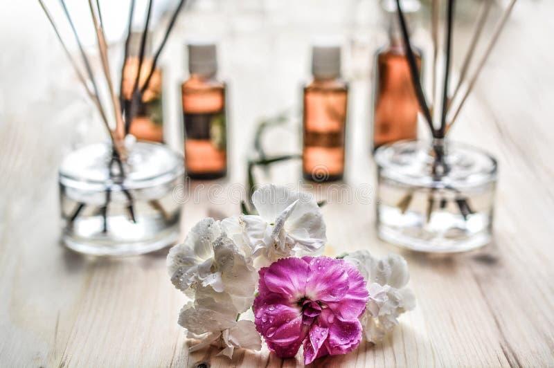 Witte en paarse bloempplant op bruin Wooden oppervlak royalty-vrije stock afbeelding
