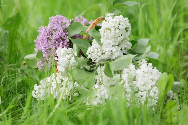 Witte en purpere lilac bloemen in mand op gras stock foto's
