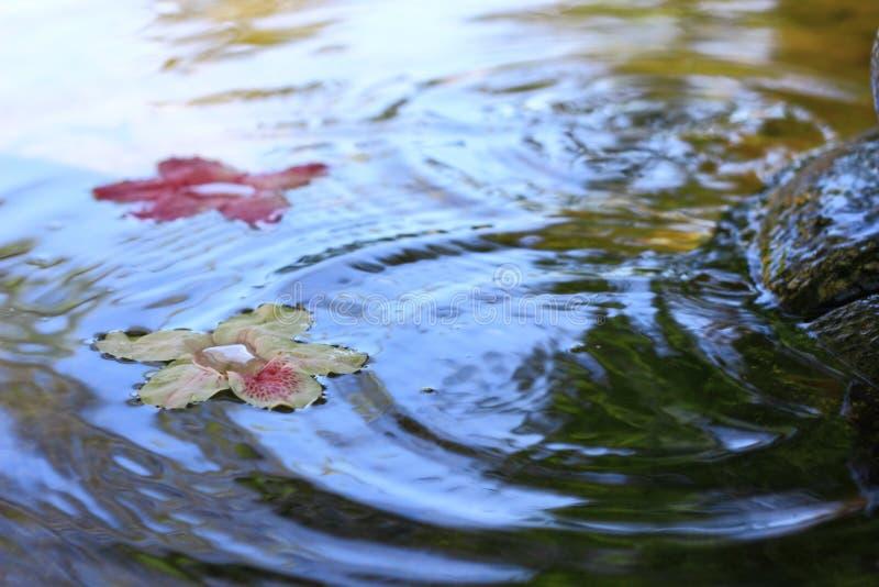 Witte en roze azalea's met bezinning royalty-vrije stock afbeeldingen
