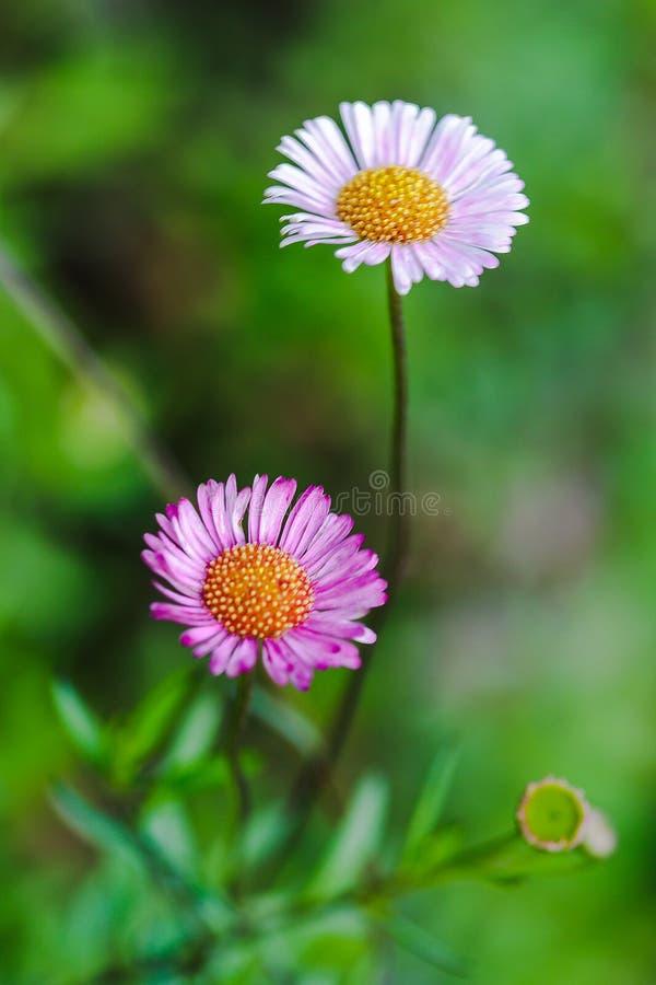 Witte en roze bloemen ter plaatse royalty-vrije stock afbeelding