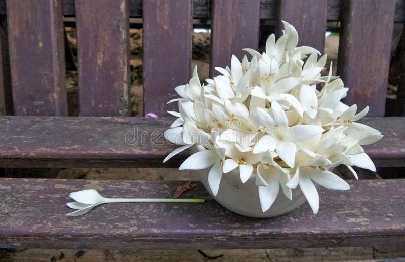 Witte fragant bloemen in de vaas op houten stoel in de tuin royalty-vrije stock fotografie