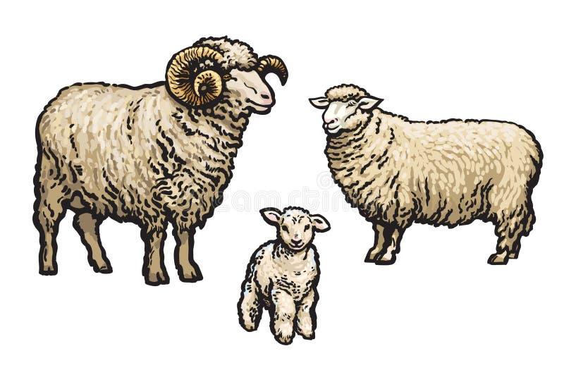 Witte geïsoleerde schapen stock illustratie