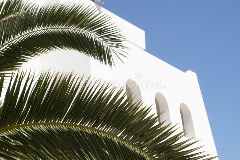 Witte geheime vensters die door grote bladeren worden verborgen royalty-vrije stock afbeelding