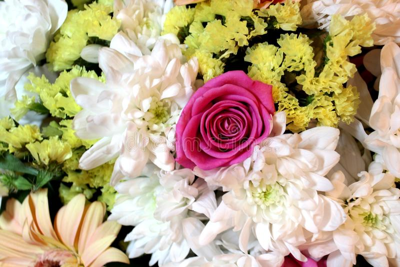 Witte, gele en roze mooie bloemen stock fotografie
