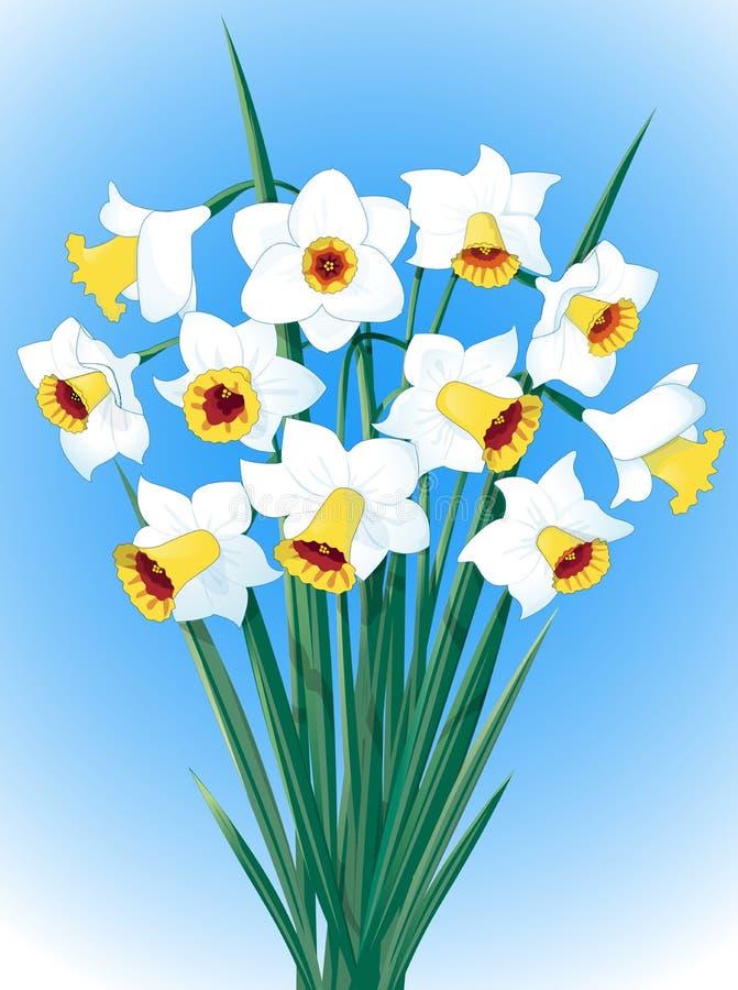 Witte gele narcissen op blauwe achtergronden royalty-vrije illustratie