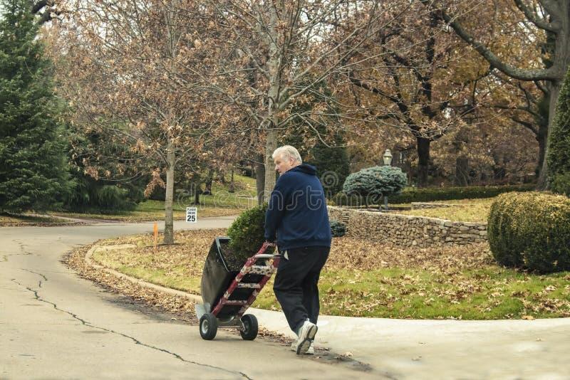 Witte haired mens die ingemaakte altijdgroene boom op dolly met twee wielen onderaan straat van rijke buurt in de winter rijden - stock afbeelding