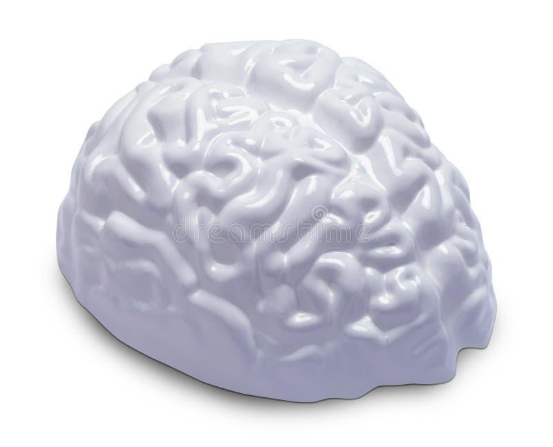 Witte hersenen royalty-vrije stock afbeeldingen