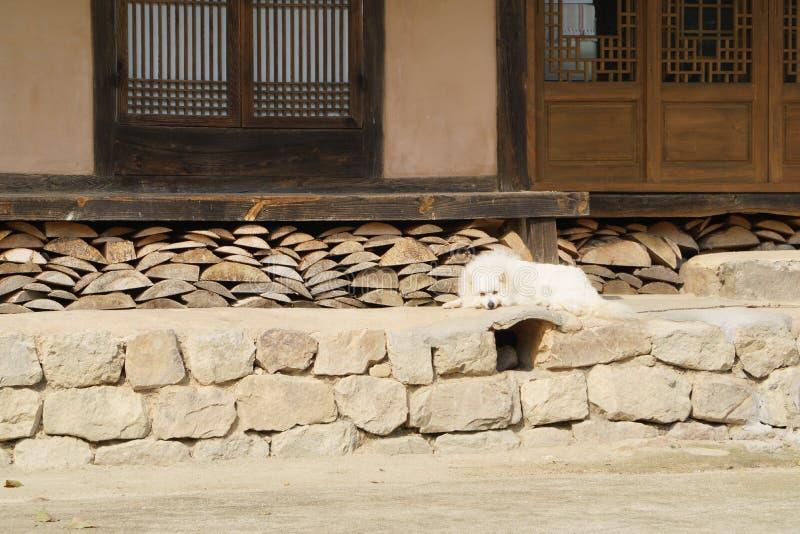 Witte hond op steen stock afbeelding