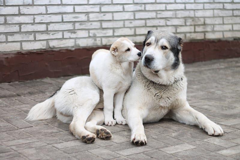 Witte hondcao Computer Aided Office puppy stock afbeeldingen