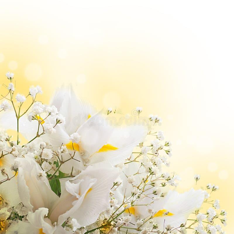 Witte irissen tegen gras stock foto