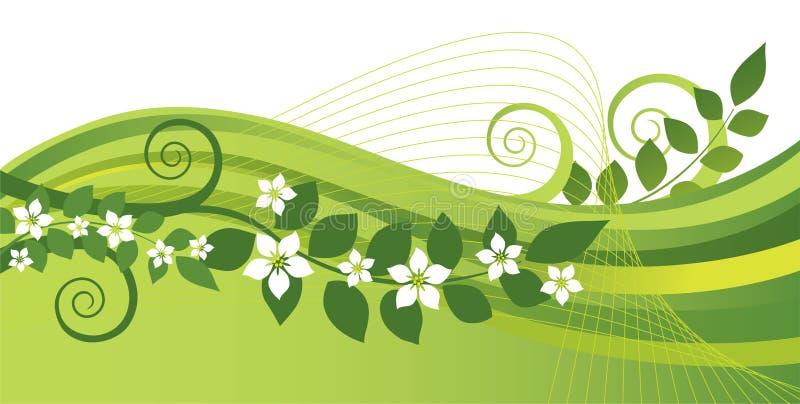 Witte jasmijnbloemen en groene wervelingenbanner stock illustratie