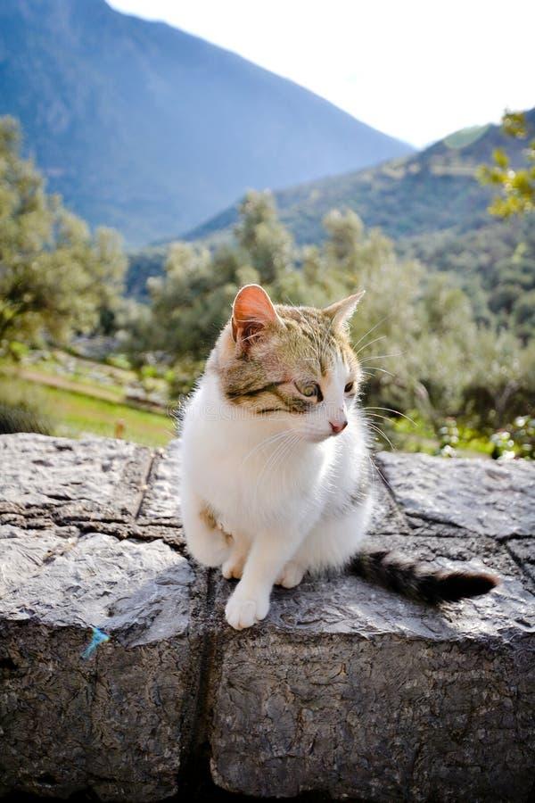 Witte Kat in Delphi Greece stock foto's