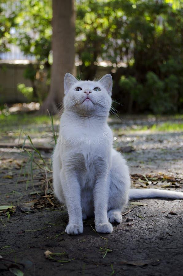 Witte kat die omhoog eruit ziet stock foto's