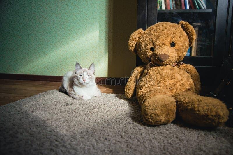 Witte kat die op een tapijt in zwart-wit vierkant van licht met teddybeer en een boekenkast liggen die u bekijken, royalty-vrije stock foto's