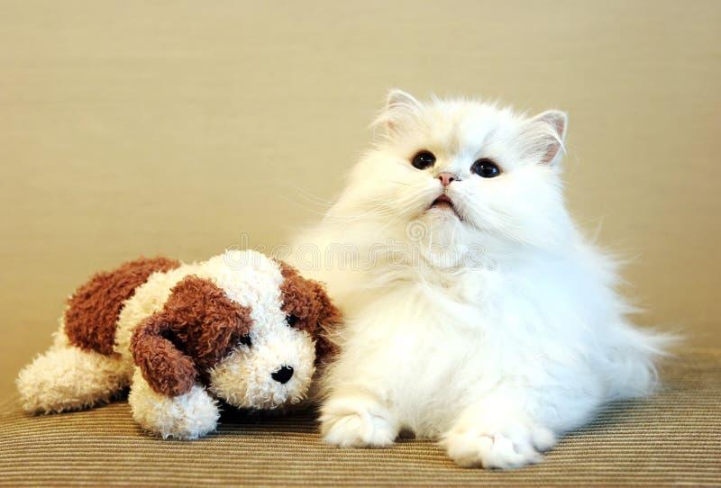 Witte kat en stuk speelgoed hond royalty-vrije stock fotografie