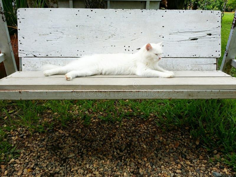 Witte kat op de bank stock afbeeldingen