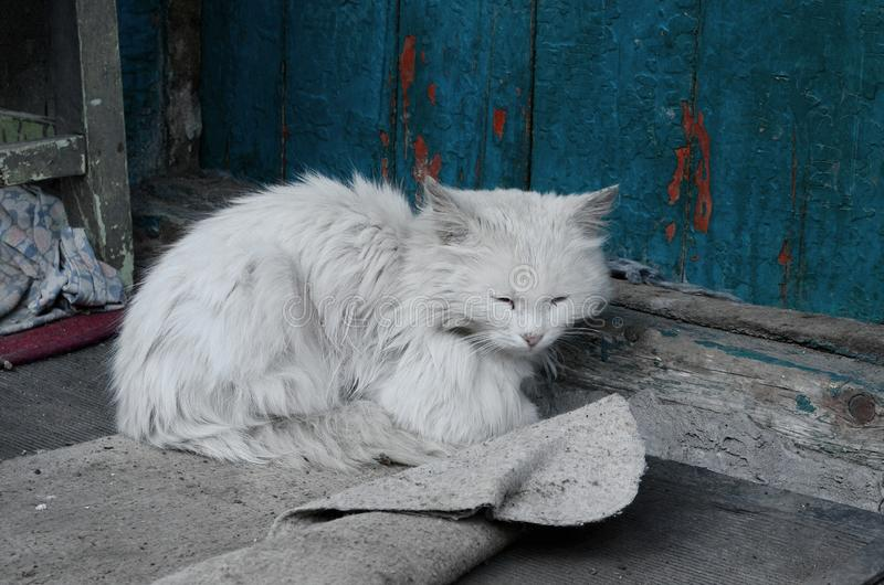 Witte kat op de dorpsportiek stock afbeeldingen