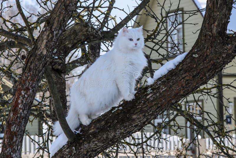 Witte Kat op een boom royalty-vrije stock fotografie