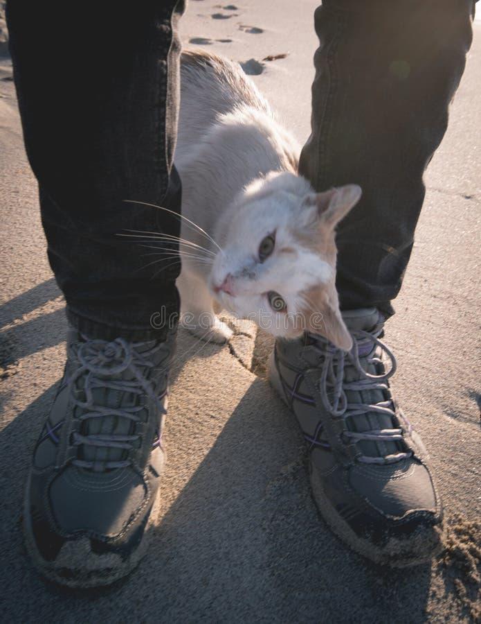 Download Witte Kat Tussen Menselijke Benen Stock Afbeelding - Afbeelding bestaande uit bakkebaard, binnenlands: 107700743