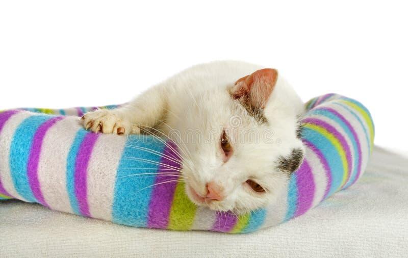 Witte kater in zijn kattenbed royalty-vrije stock fotografie