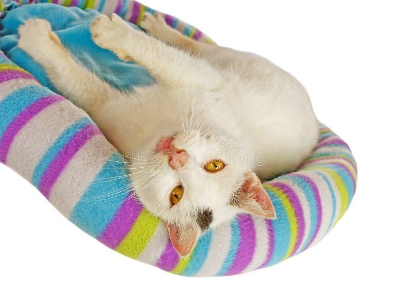 Witte kater in zijn kattenbed stock afbeeldingen