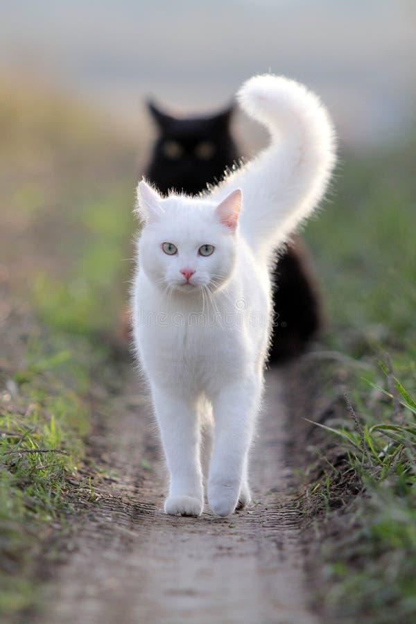 Witte katje en zwarte royalty-vrije stock afbeeldingen