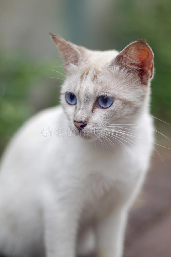 Witte katten dichte omhooggaand stock foto's