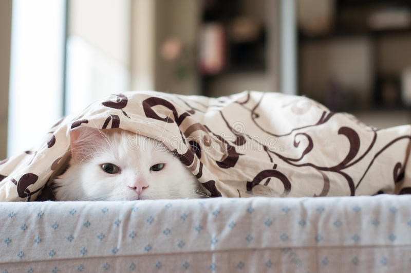 Witte kattenslaap royalty-vrije stock fotografie
