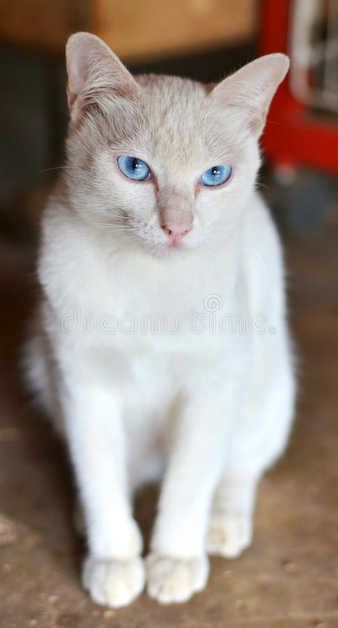 Witte kattenzitting royalty-vrije stock fotografie