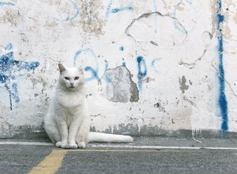 Witte kattenzitting voor een uitstekende en oude witte gekleurde steenmuur Kat die de camera met kalme verschijning onderzoeken stock afbeelding