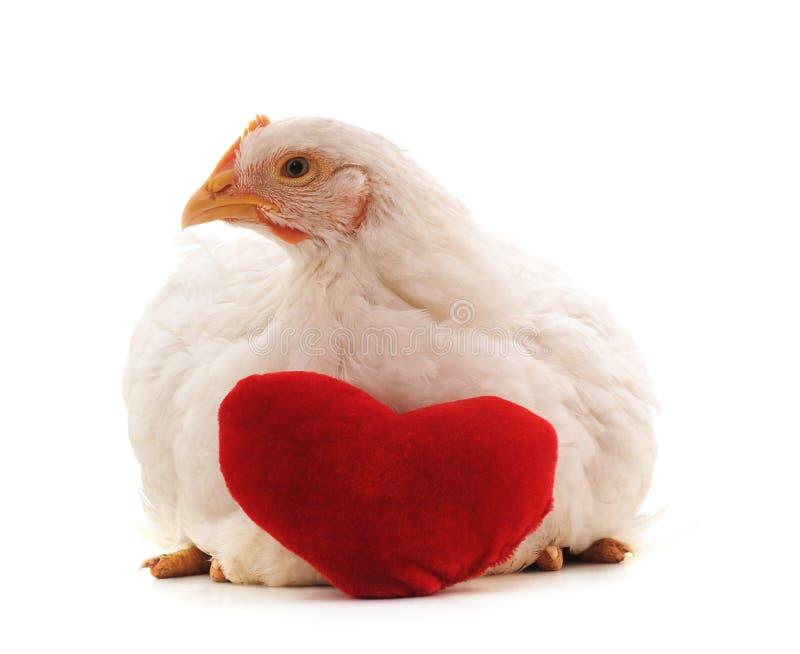 Witte kip met een stuk speelgoed hart stock afbeelding