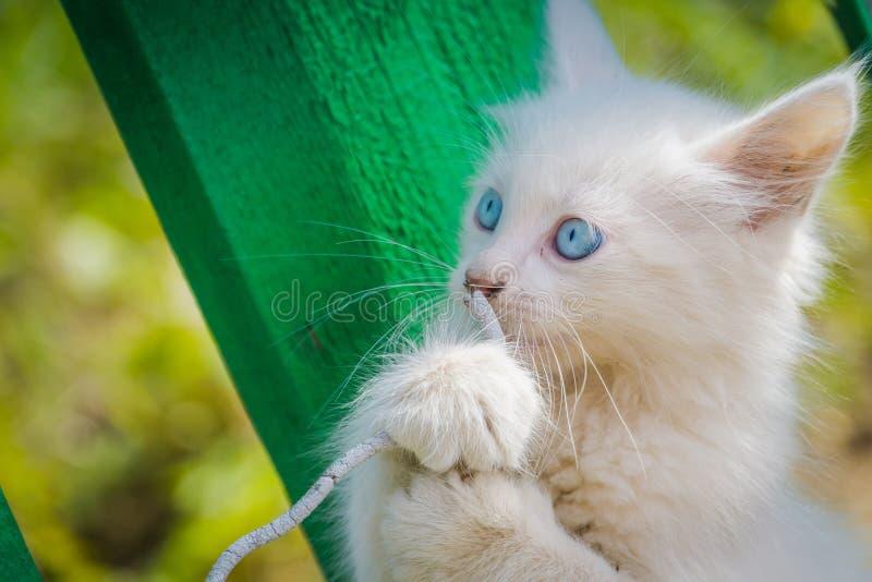 Witte Kitten Plays met Koord stock foto's