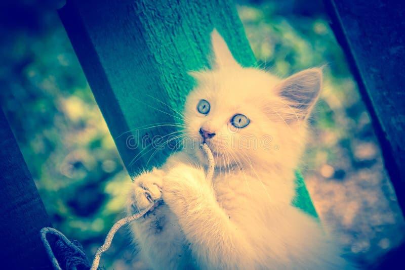 Witte Kitten Plays met Koord royalty-vrije stock foto's