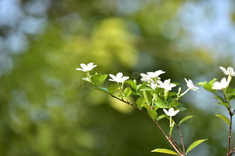 Witte kleine bloem en boom stock fotografie