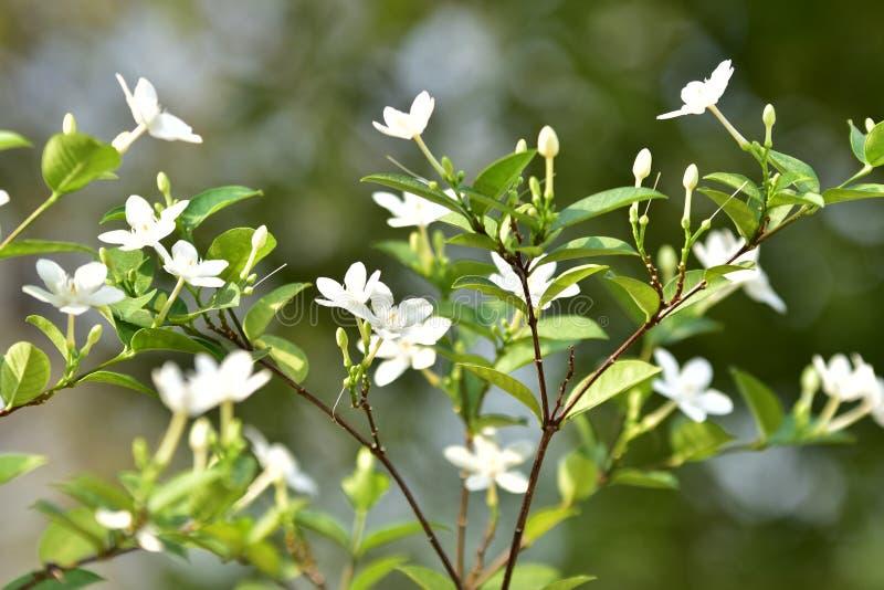 Witte kleine bloem en boom stock afbeeldingen