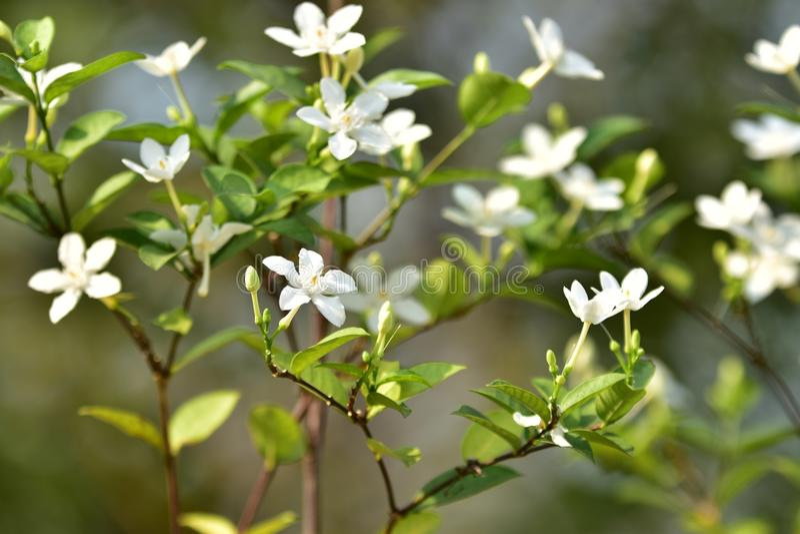 Witte kleine bloem en boom royalty-vrije stock afbeeldingen