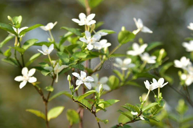 Witte kleine bloem en boom stock foto's