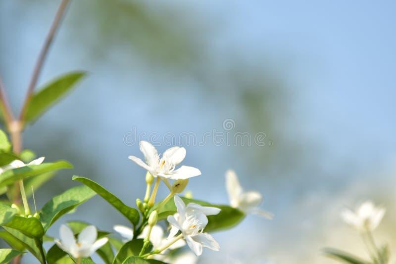 Witte kleine bloem en boom stock afbeelding
