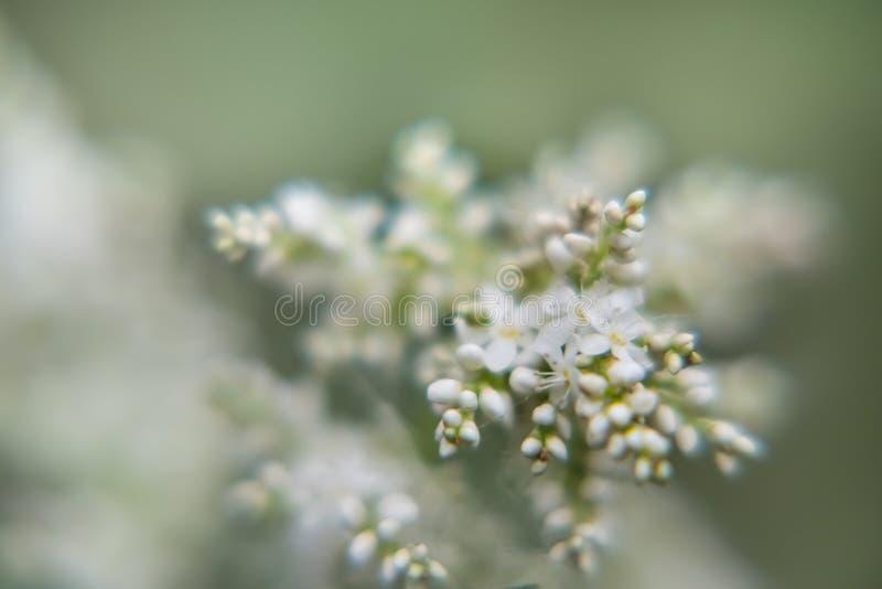 Witte kleine bloemen stock afbeeldingen
