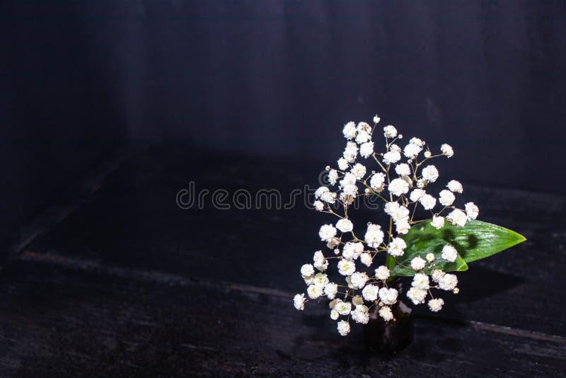 Witte kleine wildflowers royalty-vrije stock fotografie