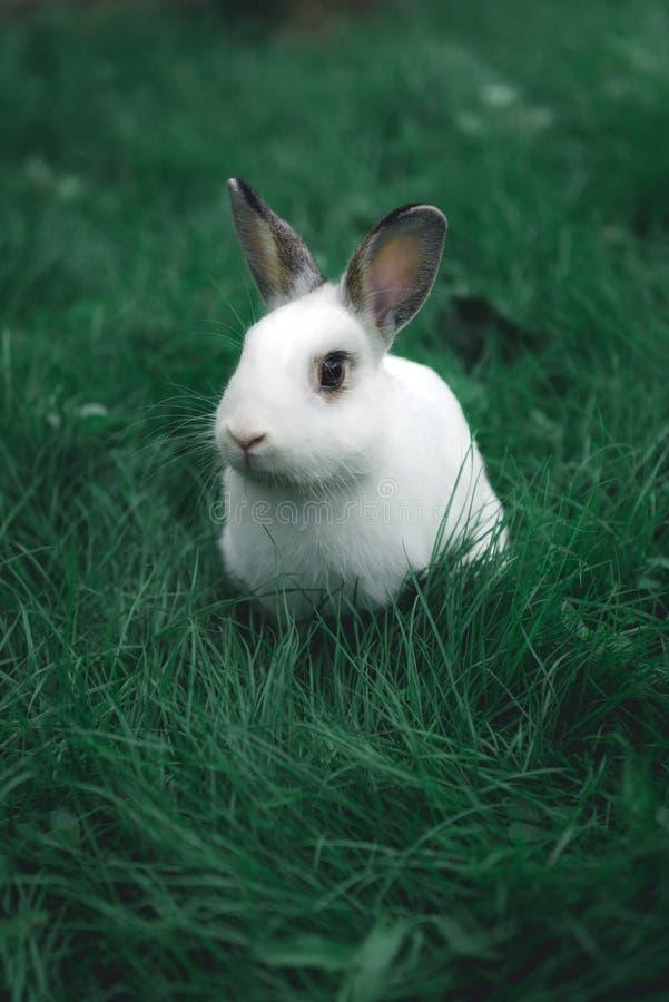 Witte konijn in het gras royalty-vrije stock foto