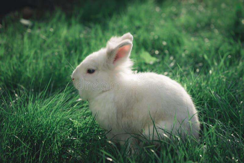 Witte konijn in het gras royalty-vrije stock foto's