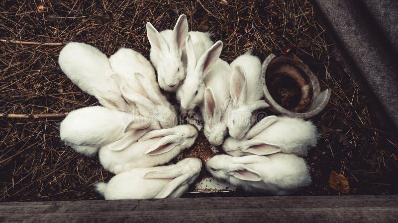 Witte konijntjeszitting op een verslagen boom, konijnen op bovenkant stock foto