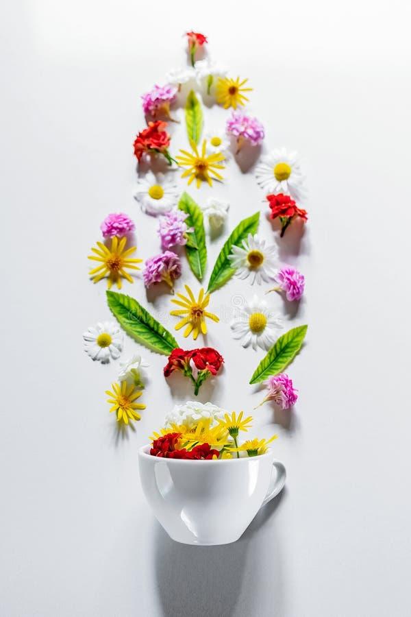 Witte Kop met de ingrediënten van de bloemthee op een witte achtergrond De conceptenzomer, aard, gezond voedsel, natuurlijke en g royalty-vrije stock afbeelding