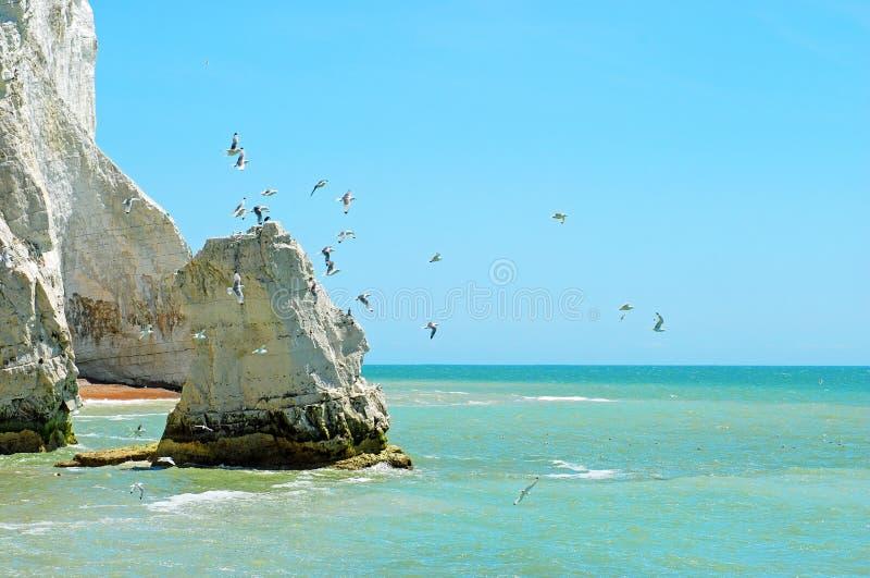 Witte krijtrots met vogels stock afbeelding