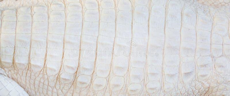 Witte Krokodillehuidtextuur stock foto's