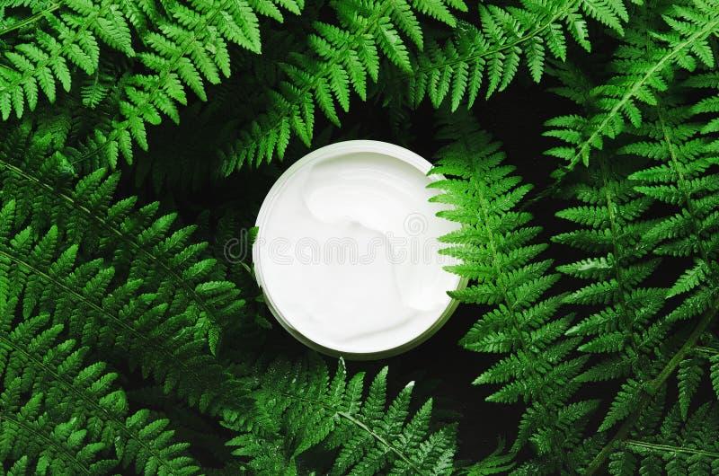 Witte kruik gezichtsroom op een achtergrond van boskruiden, varen De donkere lichte, hoogste vlakke mening, legt Concepten natuur stock afbeeldingen