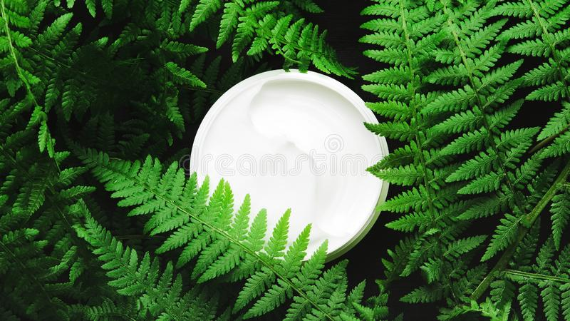 Witte kruik gezichtsroom op een achtergrond van boskruiden, varen De donkere lichte, hoogste vlakke mening, legt Concepten natuur royalty-vrije stock afbeelding